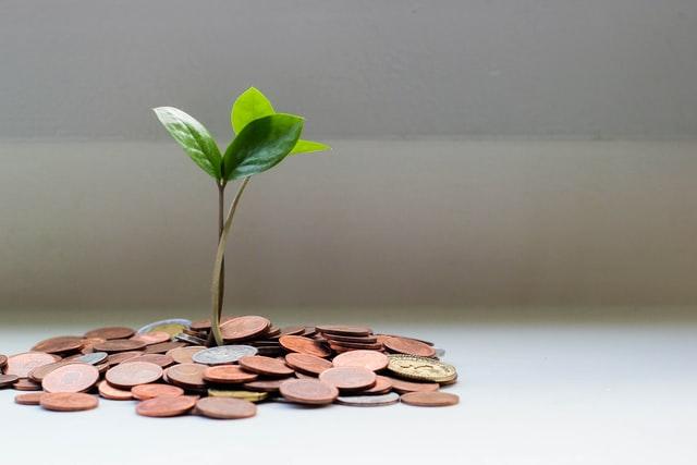 Roślina wyrastająca z monet